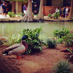 A common sight on the River Walk - San Antonio, Texas.