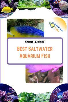 Aquarium Setup, Aquarium Ideas, Saltwater Aquarium Fish, Salt Water Fish, Water Quality, Fresh Water, Challenge, Suits, Marine Fish