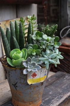mixed succulents in an industrial bucket