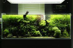Aquarium Design, Reef Aquarium, Saltwater Aquarium, Freshwater Aquarium, Aquarium Ideas, Aquarium Terrarium, Nature Aquarium, Planted Aquarium, Aquascaping Plants
