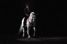 Equus | Flickr - Photo Sharing!
