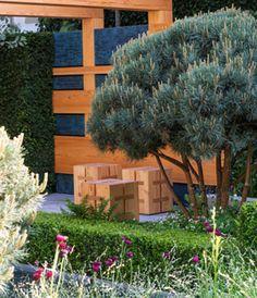 De #naaldboom is terug: deze Pinus Sylvestris doet denken aan heerlijke zomervakanties.