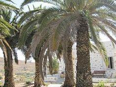 Villa of Syros Villas, Greece, World, Places, Elopements, Vacations, Houses, Greece Country, Villa
