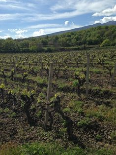 Combine the southern warmth of the sun, high-altitude, and volcanic ash with the oldest vines you can find