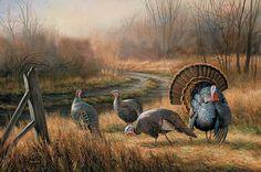 Wild Turkeys By Rosemary Millette