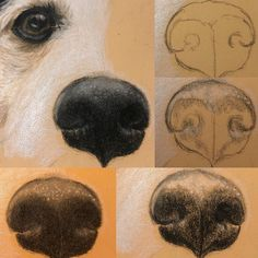 Step by step of how I draw a squidgy wet nose! Nose Drawing, Painting & Drawing, Drawing Tips, Dog Drawing Tutorial, Dog Nose, Acrylic Painting Tutorials, Animal Paintings, Dog Art, Pet Portraits