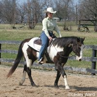 Charging Up the Lazy Horse  Top trainer Buddy Fisher offers ways to get your lazy horse to change his meandering ways.