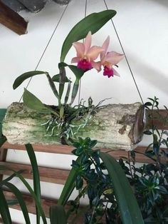 Charming Hanging Plants ideas to Brighten Your Patio – Page 7731083776 – Gardening Decor Orchid Planters, Orchid Cactus, Orchids Garden, Succulents Garden, Growing Orchids, Growing Flowers, Planting Flowers, Hanging Orchid, Hanging Plants