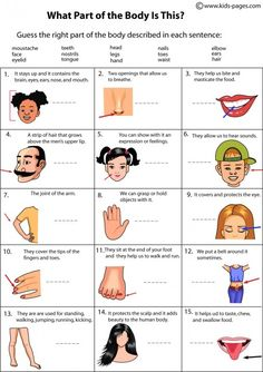 body parts for kids | Kids Pages - Body Parts Descriptions