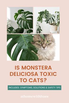 Are Monsteras safe for cats? This guide covers everything you need to know to ensure your furry friends and house plants can co-exist safely. Houseplants Safe For Cats, Toxic Plants For Cats, House Plant Care, House Plants, Cat Reading, Monstera Deliciosa, Safety Tips, Advice, Pets