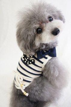 Such a cute little dog!