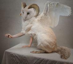 Owl-o-cat by Karolina