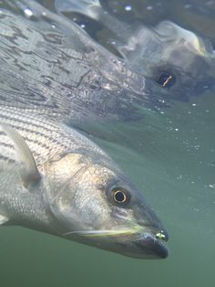2012 trout stocking schedule for maryland delaware for Best trout fishing in pa