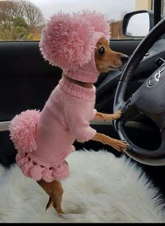 Dog sweater,dog clothes, dog clothes with hat,sweater set with pom poms,clothing for dog. Cute Bunny Pet Costume With Pom Pom Dog Hat Hundepullover Kleidung Hundekleidung mit Hut Set Funny Animal Memes, Dog Memes, Cute Funny Animals, Funny Animal Pictures, Cute Baby Animals, Funny Dogs, Animals And Pets, Funny Puppies, Fluffy Animals