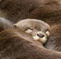 Otter cuddles bring happiness