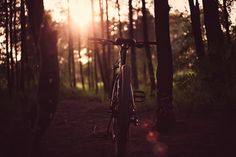 Bicycle, Bike, Dark, Landscape, Leaves, Light, Nature