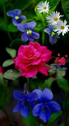 Most Beautiful Flowers, Beautiful Butterflies, Pretty Flowers, Purple Flowers, Flower Pictures, Pretty Pictures, Virtual Flowers, One Rose, Colorful Roses