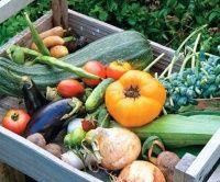 Lots of fresh veggies from my own veggie garden Starting A Vegetable Garden, Vegetable Garden Design, Vegetable Gardening, Veg Garden, Summer Garden, Garden Tools, Salvia Hispanica, Organic Gardening, Gardening Tips