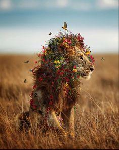 IG @marcel_van_luit Most Beautiful Animals, Majestic Animals, Beautiful Creatures, Baby Animals, Cute Animals, Tier Fotos, Animal Wallpaper, Big Cats, Animal Photography