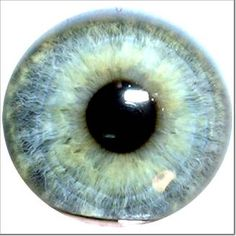 beautiful iris eye - Google Search
