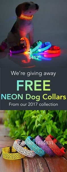FREE Neon Light USB Collar