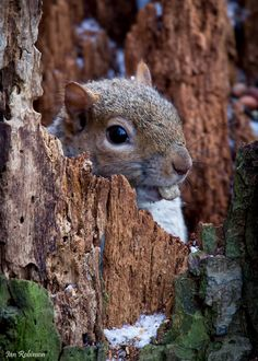 ~~Ever so slightly Nuts by Ian Robinson~~