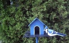 Blue Jay Lawn Ornament  Buy Now$25.00  http://yoooffer.com/2k3