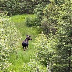 #whyilovemontana #moose #philipsburgmt #maxvillemt #mostwantedrealestate