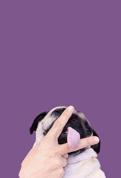 Tumblr Wallpaper, Wallpaper Pug, Tier Wallpaper, Animal Wallpaper, Iphone Wallpaper, Seagrass Wallpaper, Paintable Wallpaper, Colorful Wallpaper, Fabric Wallpaper