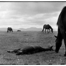 Henri Cartier-Bresson, IRELAND. Munster. County Tipperary. 1952.