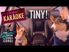 check out more of Tiny and other talented doggies in all 3 of the Pup Star movies, available now on The Late Late Show, Movie Releases, Karaoke, Doggies, Netflix, Pup, Corgi, Stars, Check