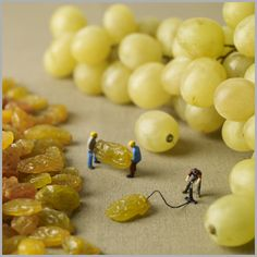 Raisin d'etre - another fab new Minimiam card for 2013