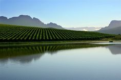 Wijnlanden - de prachtige Zuid-Afrikaanse wijnlanden omringen Kaapstad met top plaatsen als Stellenbosch en Franschhoek.