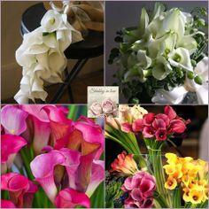 callas - my wedding flower