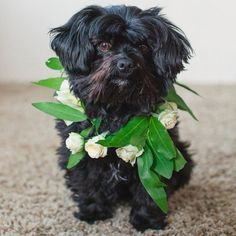 DIY floral wreath for your pup on your wedding day!