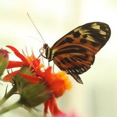 Breakfast with the Butterflies Chicago, IL #Kids #Events