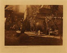 Curtis: Interior of sun dance lodge - Cheyenne