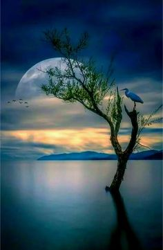 Moon at Night with lone tree, lake painting idea. So pretty.