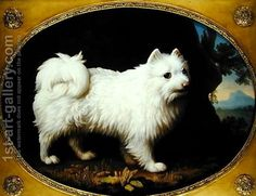 A White Spitz, c.1770 by George Stubbs
