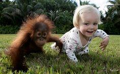 Emily e Rishi se conheceram em 2008, durante uma visita a uma reserva de animais nos Estados Unidos. Na ocasião, a garotinha acompanhava o pai Barry Bland, que é fotógrafo, em um trabalho no local e adorou a companhia do orangotango de apenas alguns meses de vida.  http://colunas.globorural.globo.com/planetabicho/tag/orangotango/