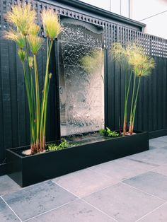 Custom made 'Mirror Wall' water feature and stainless steel pond, powdercoated to match colour of fence. Pond includes professional lighting and the following plants; Cyperus papyrus, Pondeteria cordata, Chromatella water lily, Hydrocleys nymphoides and eel grass (which provides habitat for the fish).