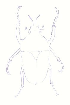 THE LINE DRAWING: The first step in our beetle drawing is to establish its shape in line. This is not a simple outline of the image. The weight of your line should vary to suggest the tones of your drawing. This will help you when you start to build up the tonal structure at the next stage of your work.