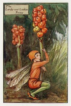 This beautiful Lords-and-Ladies (Autumn) Flower Fairy Vintage Print by Cicely Mary Barker was printed c.1927 and is an original book plate from an early Flower Fairy book. Cicely Barker created 168 flower fairy illustrations in total for her many books...