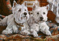 Thomas Rivers Lovelace | Westie - West Highland White Terrier