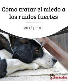 Cómo tratar el miedo a los ruidos fuertes en el perro Tormentas, fuegos artificiales, ambulancias, un plato rompiéndose... Cada vez que tu perro escucha uno de estos ruidos fuertes, desaparece. #tratamiento #salud #ruido #perro