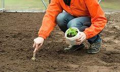 Zahradníkův kalendář na celý rok: kdy sít a sázet zeleninu, květiny, dřeviny?- Užitková zahrada Farm Life, Gardening, Gardens, Permaculture, Plants, Composters, Garten, Lawn And Garden, Horticulture