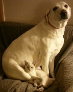 New kitty made friends with old dog!!