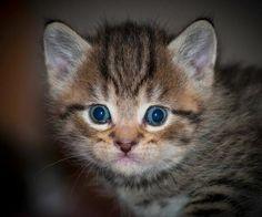 Poppy's Kittens [4]  kitten