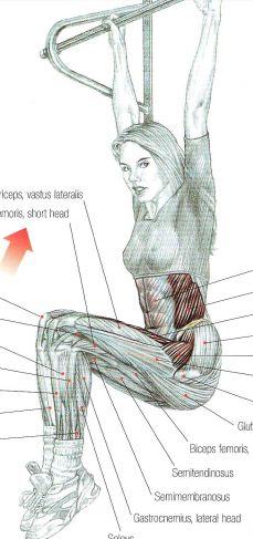 workout anatomy pull up bar