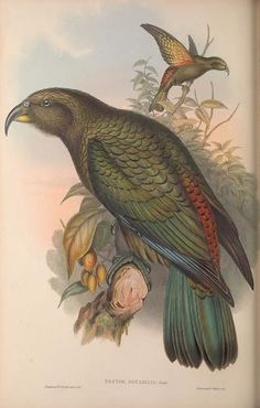 The birds of Australia, supplement / - Biodiversity Heritage Library